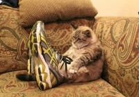 a lol cat training for the triathlon